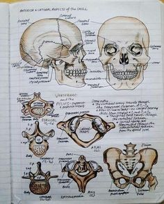 Anatomy & Physiology I can use my art skills to study! This is genius! Medical Students, Nursing Students, Science Student, Life Science, Nursing School Notes, Medical School, Anatomy Study, Anatomy Park, Grey's Anatomy