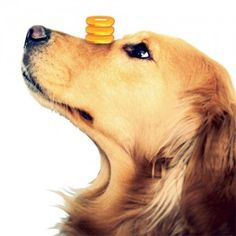 Dog Supplements - Best Supplements for Pets - ALL YOU