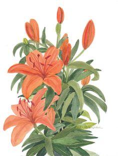 Orange Lillies Original Watercolor by wandazuchowskischick on Etsy
