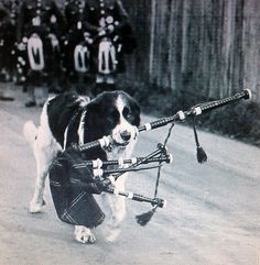 My favourite picture ever. Bagpipes are a big part of my life. Best Of Scotland, Scotland Funny, Scotland Travel, Bagpipe Music, Scottish People, Celtic Music, Mina, Irish Traditions, Vintage Dog