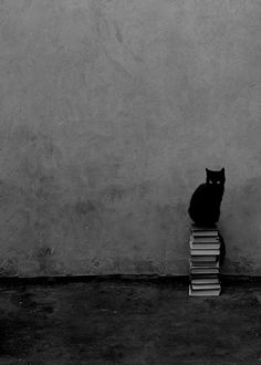 Cat & books, can't go wrong. Cool Cats, I Love Cats, Crazy Cat Lady, Crazy Cats, Happy Friday The 13th, Video Chat, Photo Chat, Cat Boarding, Here Kitty Kitty