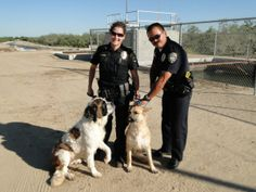 On Friday, two officers in Ripon, California were the heroes to two dogs that were stuck and on the verge of drowning in an irrigation canal. www.lifewithdogs.tv/2013/06/police-officers-rescue-two-dogs-from-canal/