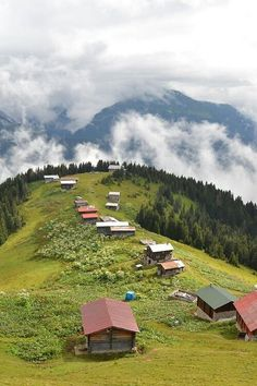 Rize....