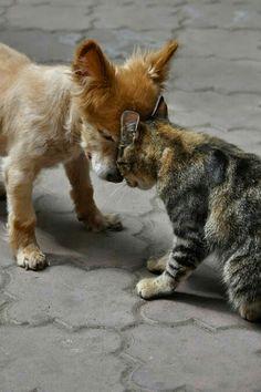 Gentle Greetings My Friend I #ForTheLoveOfDog
