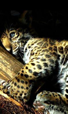 #animals #amazingphoto #photooftheday #picoftheday