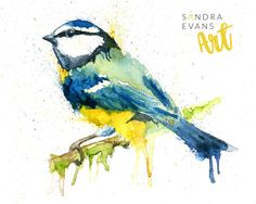 Original painting of a blue tit (watercolour on paper) #watercolour #bird #wildlife #nature