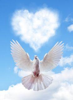Ciel avec nuage de forme de coeur et Colombe — Image Photo Ciel, Desenho Tattoo, Background Pictures, Animals Beautiful, Heart Shapes, Creatures, Clouds, Stock Photos, Heaven
