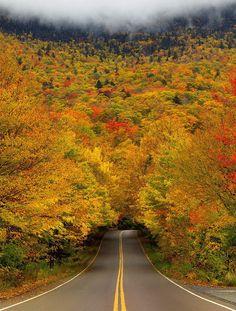 Autumn Tree Tunnel, Vermont