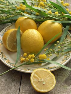 Plate of Lemons and Mimosa Flowers