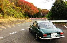 Giulia on the winding road of autumn leaves in Japan.