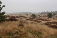National Park 'De Hoge Veluwe' in The Netherlands on a misty day.