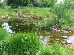 Wildlife pond. I love the messiness of this pond and if only I had the space! mine will be a much smaller affair...