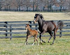 Rachel Alexandra and her first foal, a Curlin colt born on Jan. 22, 2012, at Stonestreet Farm.
