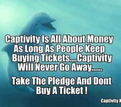 """""""PLEASE Don't Buy a Ticket"""" - I am guilty of going to both a dolphin and a whale show at Sea World...it was a dream come true for me. Then I saw their """"concrete homes"""" and the tears in my eyes were more of sadness for them, rather than happiness for me. :*( NEVER AGAIN!! Unless they are being rehabilitated NO animal belongs in captivity!"""