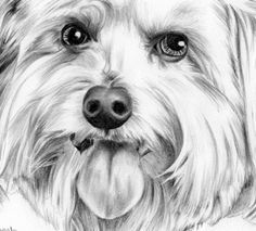 Colored Pencil Drawing Of A Dog Youtube/page/13 | Desain Rumah ...