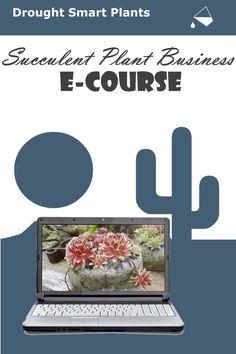 Start Your Own Succulent Plant Business; growing succulents for profit. Succulent Planter Diy, Diy Planters, Growing Succulents, Planting Succulents, Overwintering, Plant Nursery, Echeveria, Way To Make Money, Garden Art