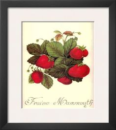 size: Framed Art Print: Fraise Mammouth : Our professional designers have pre-selected this frame and mat combination to complement your art print. Each piece is hand-framed by framing experts right here in the USA. Strawberry Fields Forever, Large Art, Art Gallery, Canvas Prints, Frame, Artwork, Poster, Strawberries, Paintings