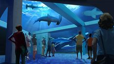 The Georgia Aquarium Expansion aims to foster a new understanding of sharks with floor to ceiling windows to allow people to get close to sharks. Read our interview with the CEO of the aquarium on Blooloop. Georgia Aquarium, Big Aquarium, Aquarium Design, Shark Habitat, Centennial Olympic Park, Stuff To Do, Things To Do, Species Of Sharks, New Shark