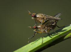 Sexing flies by Lidia, Leszek Derda on 500px