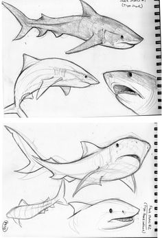 Drawing Tips animal drawings Pencil Art Drawings, Art Drawings Sketches, Cool Drawings, Pencil Drawing Pictures, Animal Sketches, Animal Drawings, Art Reference Poses, Drawing Reference, Shark Art