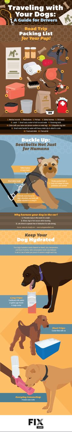 Traveling with Dogs: A Guide for Drivers #Infographics