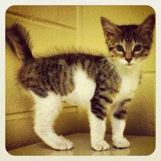 Pretty kitty - @melissa_j0y- #webstagram /
