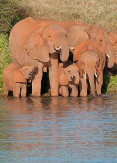 Loisaba Wilderness   Baby Elephant Rescue at Loisaba, Kenya When you like, share, or follow IvoryForElephants..., help us gain media $$ to help save them. #ivoryforelephants #stoppoaching #elephants for #ivory ! #animals #killthetrade #extinction #babyelephant #animalbabies