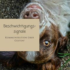 Unsere Hunde haben uns so viel zu sagen. Wir müssen nur lernen, sie zu verstehen!