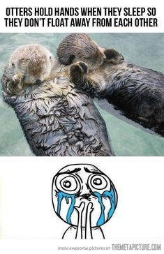 otters hold hands when they sleep so they don't float away from each other- OMG IF THIS IS TRUE, AWWWWWWWWWWWWW!!  <<3