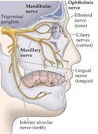 Algunos #Nervios #cabeza www.clinicadentalmagallanes.com