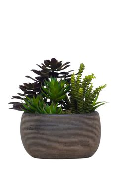 Luxe Art Succulent In Brown Bowl F-15-210-089