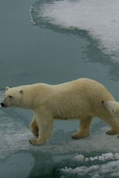 Polar Bears to People: Momentum on Climate Change
