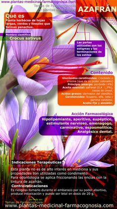 Infografía. Resumen de las características generales de la planta de Azafrán. Propiedades, beneficios y usos medicinales más comunes del Azafrán