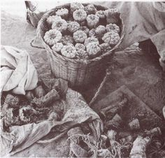 Basket of Peyote
