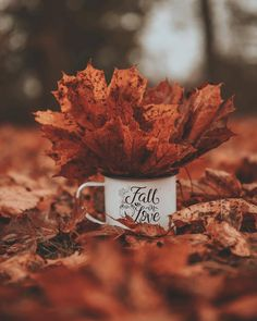 🎃Photos are not mine unless stated🎃 👻Cozy Vibes👻 🍂Autumn is back🍂 Autumn Tumblr, Outside Fall Decorations, Happy Photos, Autumn Cozy, Autumn Aesthetic, Autumn Photography, Inspiring Photography, Photography Ideas, Fall Wallpaper