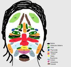 tcm-mtc-face- aum vitae-c Qi Gong, Acupuncture, Shiatsu, Face Mapping, Massage Techniques, Medical, Chinese Medicine, Yoga, Acne Treatment