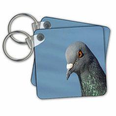 Taiche - Photography - Pigeon - Pigeon - Key Chains - set... https://www.amazon.com/dp/B01M159IMP/ref=cm_sw_r_pi_dp_x_lgb6ybES85FSW