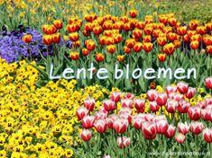 Prachtige foto's van bloemen die in de lente bloeien. Het gaat om het sneeuwklokje, de crocus, de narcis, de hyacint, de blauwe druifjes, de viooltjes, de paardebloemen, de klaprozen, de elzenkatjes, de forsythia en de appelbloesem. Van sommige bloemen zijn meerdere foto's om enkele details duidelijk te laten zien. http://digibordonderbouw.nl/index.php/themas/lente/lentedigibordlessen/viewcategory/177