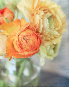 Autumn, 11x14 fine art print of orange and yellow ranunculus