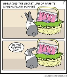 The chronicle based on living with three furry roommates: Lance, Russette and Samuel L. Each has their own ability to find trouble and adventure. Funny Bunnies, Baby Bunnies, Cute Bunny, Bunny Meme, Adorable Bunnies, House Rabbit, Pet Rabbit, Secret Life Of Rabbits, Bunny Quotes