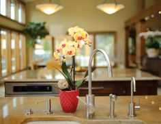 Yellow Orchid by Kitchen Sink