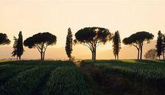 Maremma, Tuscany Italy