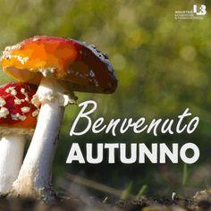 <3 #benvenuto #autunno #welcome #autumn #ibf #ibfstore #funghi
