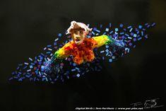 Artist :: Tom Parthum :: pixel art :: plastice :: kunst :: digital :: birth figurehead :: galionsfigur :: rainbow :: resin :: epoxy :: epoxi :: ministeck :: kunstharz :: www.per-plex.net :: www.facebook.com/galleryperplex/ ::