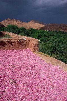 Le village d'El Kelaa M'gouna est situé à l'est de Ouarzazate, à l'entre de la vallée du Dades.