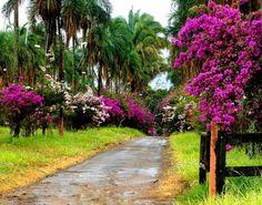 Trindade - Goiás, Brazil.  Photo: Osvaldo Eaf
