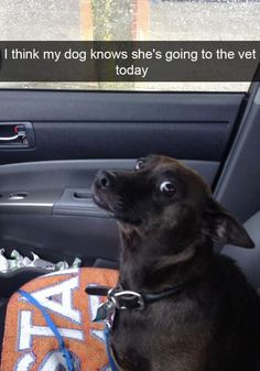 FunRare funny animal pictures of the day release 2 that has 26 hilarious animal photos. Funny animal photos with captions are for those who love cute dogs, silly animals, cute cats, and animals doing strange things. Funny Animal Memes, Cute Funny Animals, Funny Cute, Funny Dogs, Cute Dogs, Funny Memes, Top Funny, Memes Humor, Cats Humor