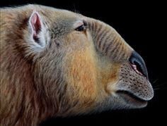 Pictures, illustrations and photographs of the giant mammals and megafauna of the Cenozoic Era, ranging from Aepycamelus to the Woolly Rhino.