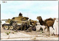 Tiger Tank, Tunis, 1943