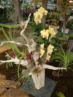 Orchid Mounting Ideas | Orchid & Tillandsia Arrangement on Driftwood